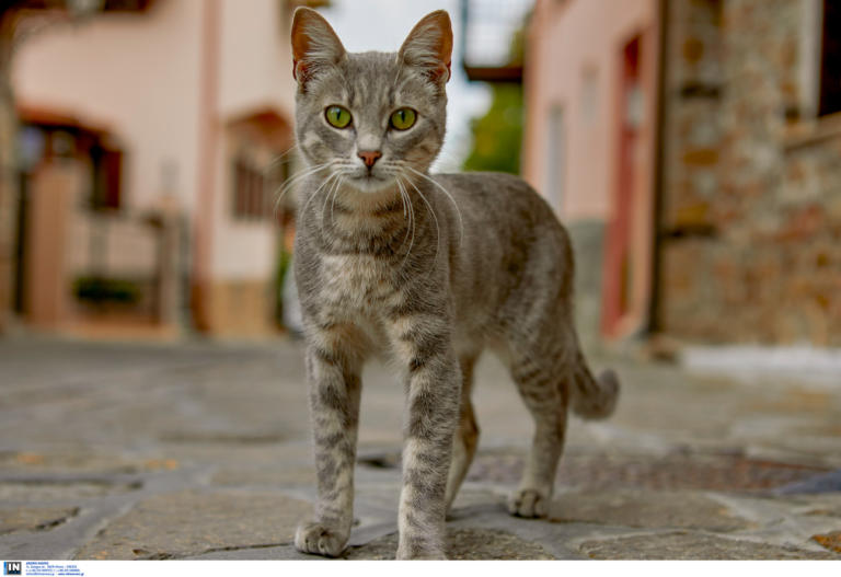 Μυτιλήνη: Ξεκοίλιασαν γάτα για να δουν αν έχει μωρά – Οργή για την κτηνωδία ανηλίκων στο λιμάνι [pic]
