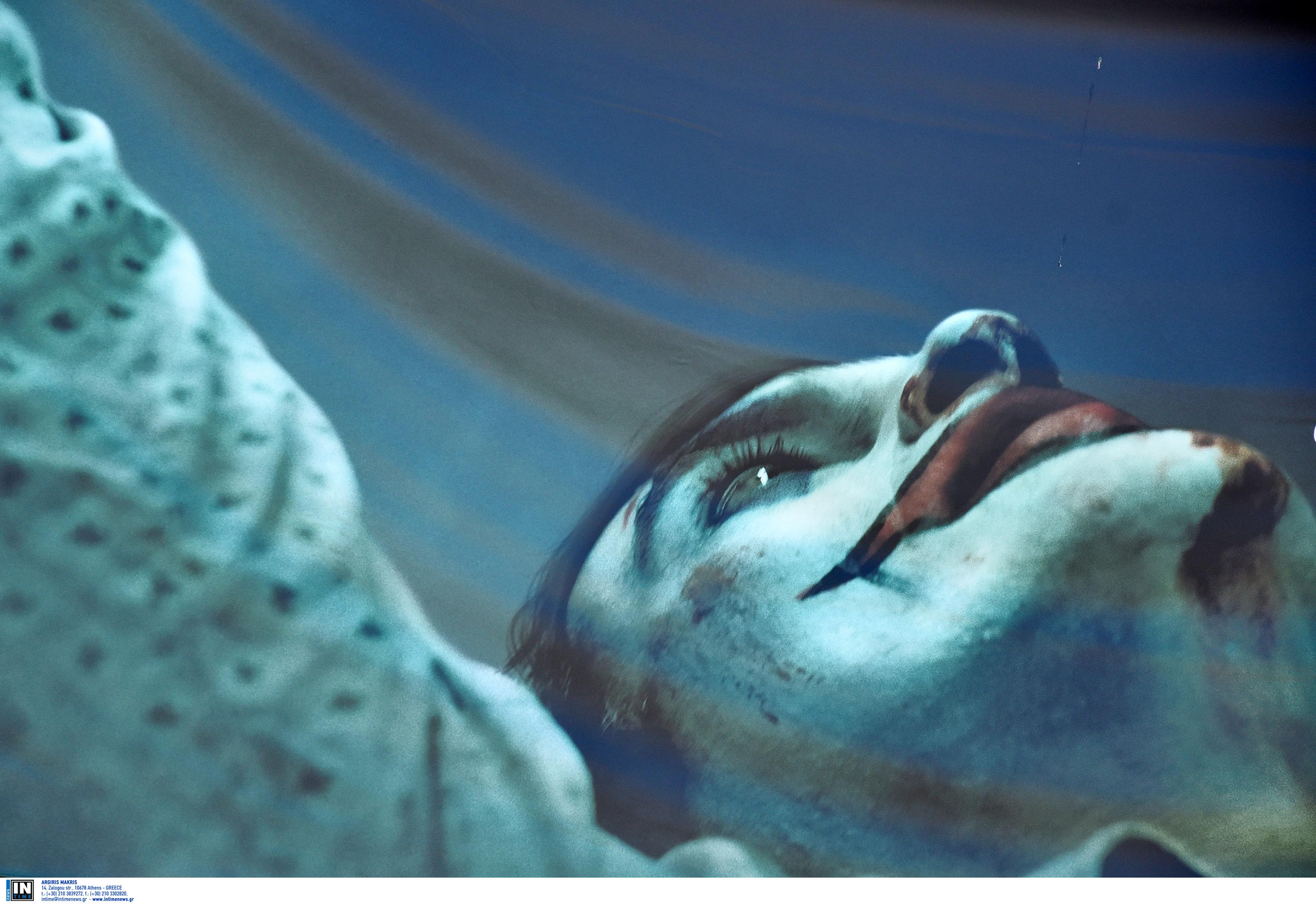 Ραγκούσης κατά Πέτσα: Με διάταγμα του Κ. Μητσοτάκη οι έφοδοι στον… Joker