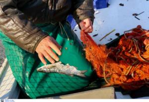 Ηράκλειο: Κατασχέθηκαν 38 τόνοι ψάρια και θαλασσινά – Πρόστιμα 20.000 ευρώ από το λιμενικό!