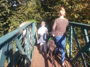 """Σκυλιά – """"βάλσαμο"""" για παιδιά με αυτισμό – Πώς εκπαιδεύονται οι τετράποδοι """"βοηθοί"""" – video"""