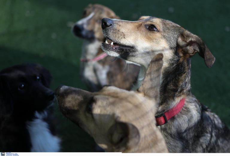 Ανεξέλεγκτα άγρια σκυλιά στο νοσοκομείο Κιλκίς! Ασθενής κινδυνεύει να χάσει το πόδι του!