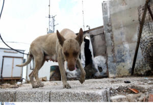 Βόλος: Παραδειγματική τιμωρία σε ιδιοκτήτρια σκύλων – Τι έδειξαν οι δύο αυτοψίες στο σπίτι της!