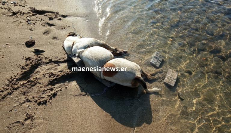 Βόλος: Σοκάρει η εικόνα της θηριωδίας – Σκότωσε τον σκύλο με τρόπο ανατριχιαστικό [pic]