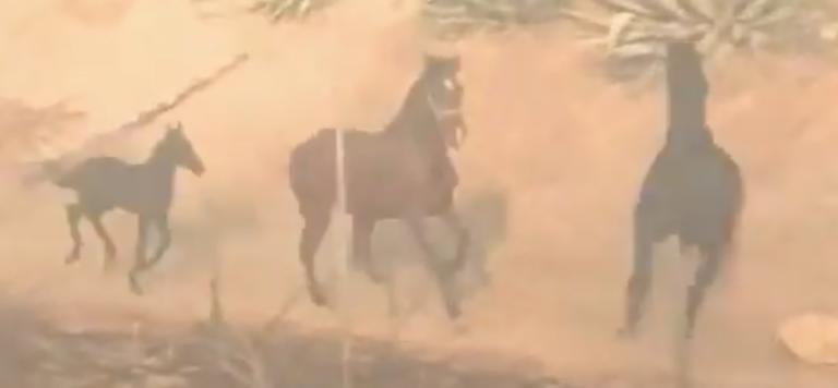 Το άλογο που γύρισε στην φωτιά για να σώσει την οικογένειά του! [video]
