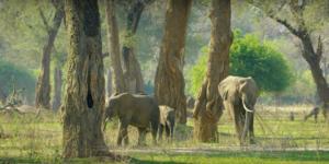 """Ζιμπάμπουε: Εκατοντάδες άγρια ζώα """"μετακομίζουν"""" εξαιτίας της ξηρασίας! video"""