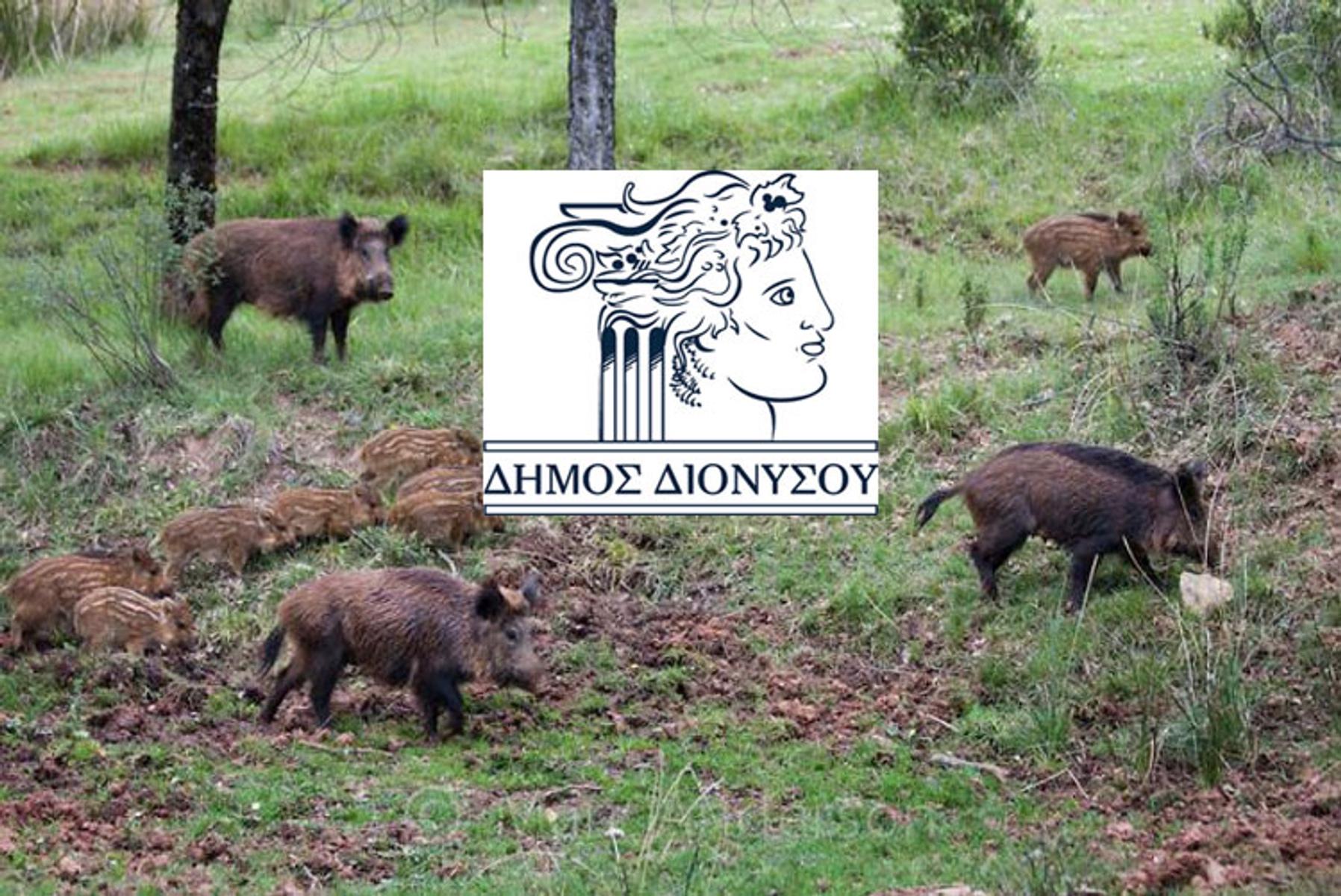 Προσοχή στα αγριογούρουνα στον Διόνυσο! Οδηγίες του δήμου