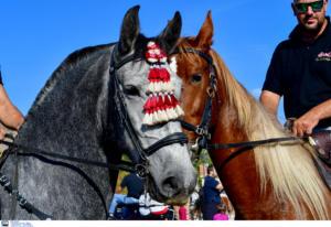 Άργος: Λατρεία για τα άλογα – Δωρεάν βόλτες για μικρούς και μεγάλους [pics, video]
