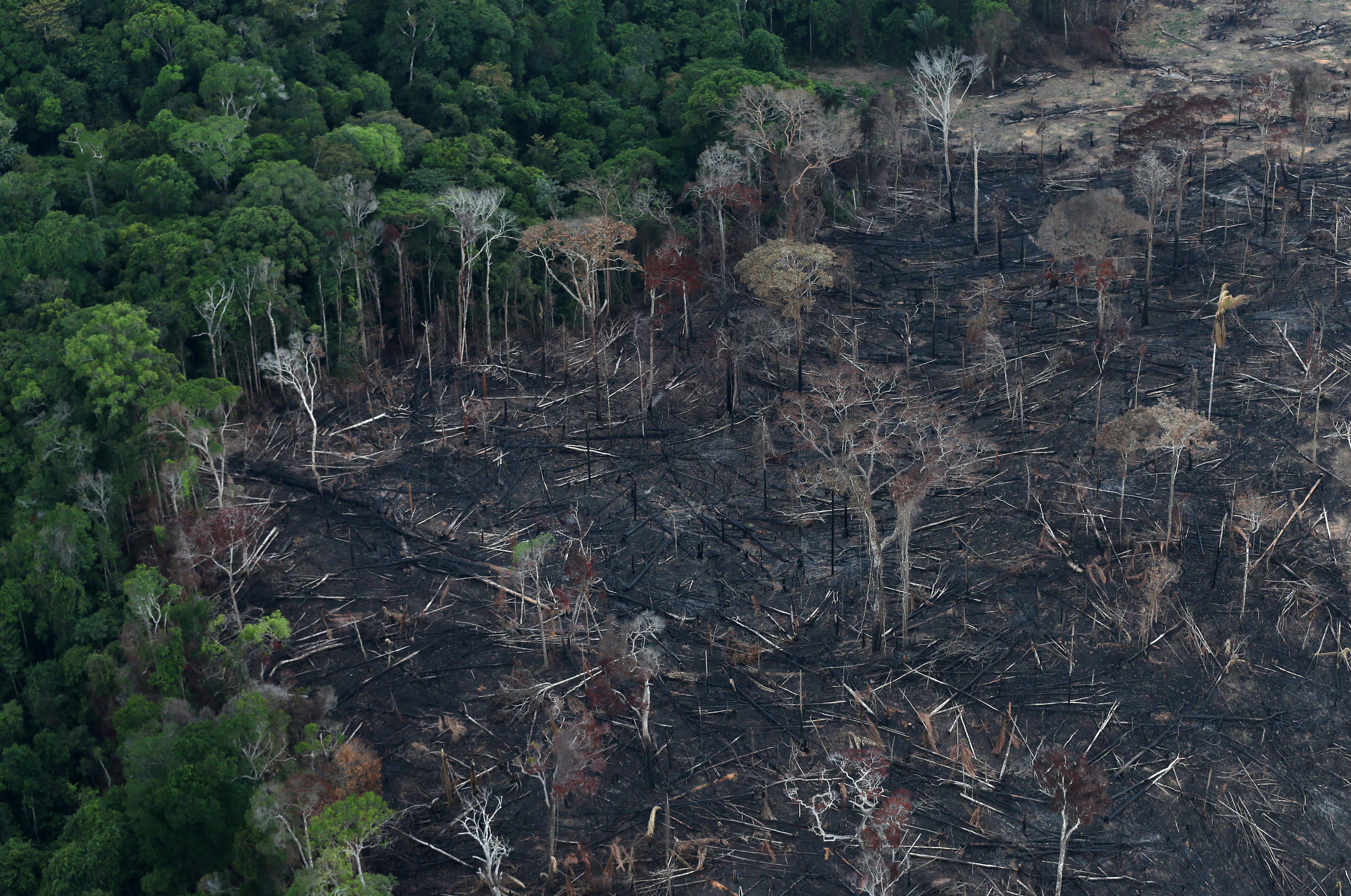 Ασύλληπτη η κατάστροφή στον Αμαζόνιο! Πάνω από 10.000 τετραγωνικά χιλιόμετρα η έκταση που αποψιλώθηκε