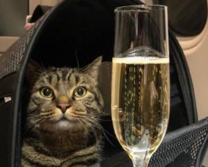 Επιβάτης της Aeroflot έχασε όλα τα μίλια του λόγω… γάτου!