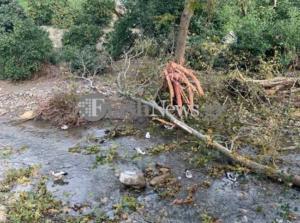 Χανιά: Δέντρο καταπλάκωσε άνδρα στον Πλατανιά – Νεκρός ο 67χρονος