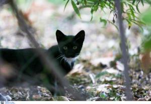 Πέθανε το γατάκι που ξεκοίλιασαν παιδιά στη Μυτιλήνη – Σοκάρει η περιγραφή του εγκλήματος