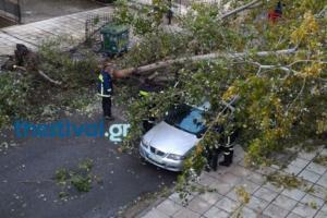 Θεσσαλονίκη: Πτώσεις δέντρων στο κέντρο της πόλης – Κλειστά σχολεία στη Χαλκιδική – video