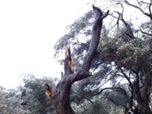 Κέρκυρα: Ανεμοστρόβιλος και καταιγίδες έφεραν αυτές τις εικόνες – Διακοπές ρεύματος μετά από πτώση κεραυνού [pics]