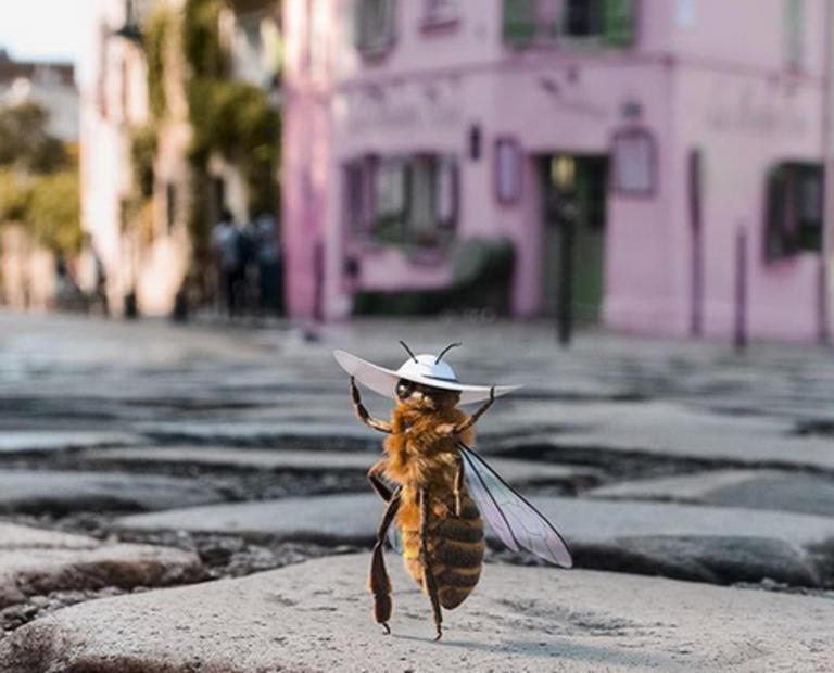 Η πρώτη μέλισσα… influencer που έχει τρελάνει το Instagram [pics]