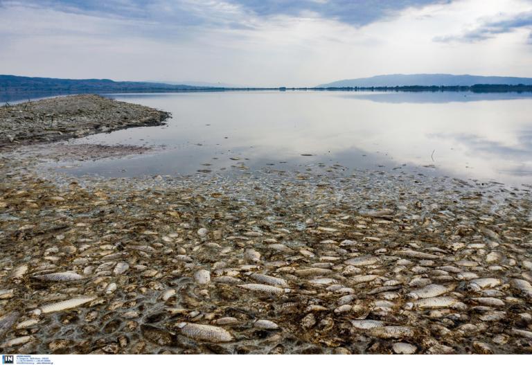 Εκατοντάδες νεκρά ψάρια στη λιμνοθάλασσα του Αιτωλικού! video