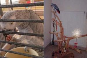 Κρήτη: Αμοιβή 700 ευρώ σε όποιον βοηθήσει να βρεθεί αυτός ο αφρικανικός παπαγάλος [pics]