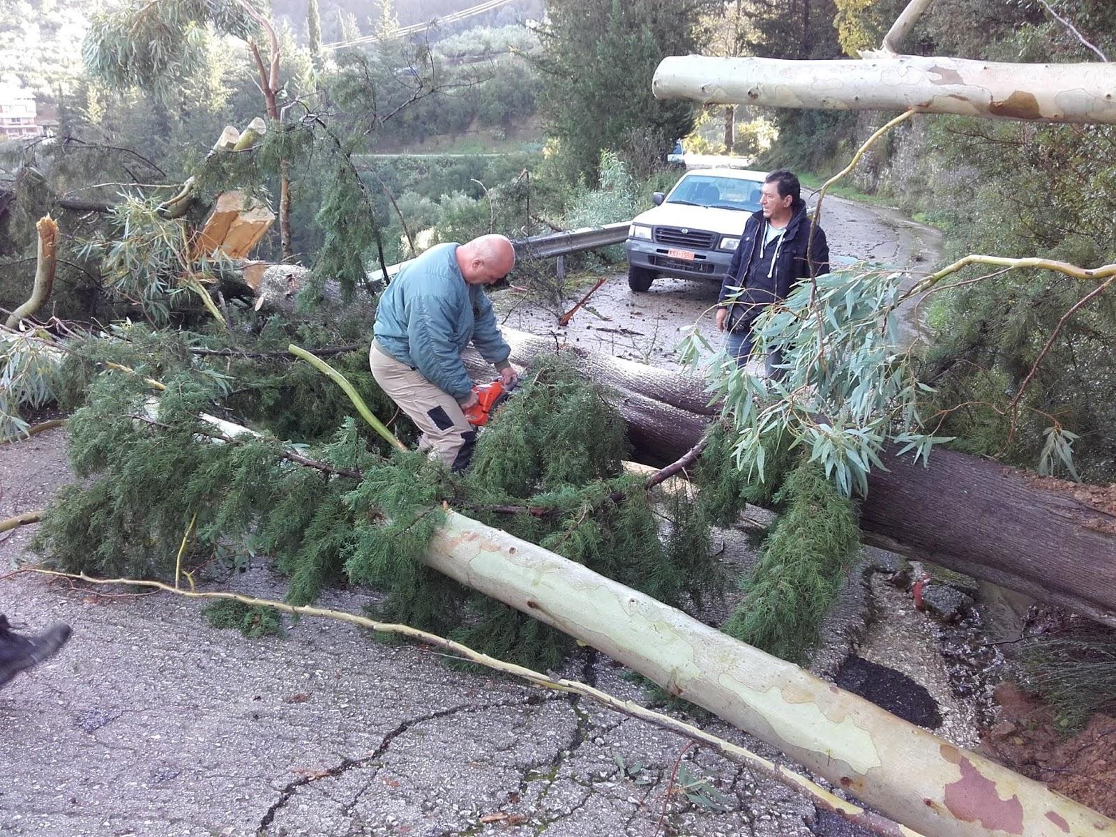 Άρτα: Πτώσεις δέντρων, κλειστοί δρόμοι και προβλήματα από το πέρασμα της νυχτερινής κακοκαιρίας [pics]