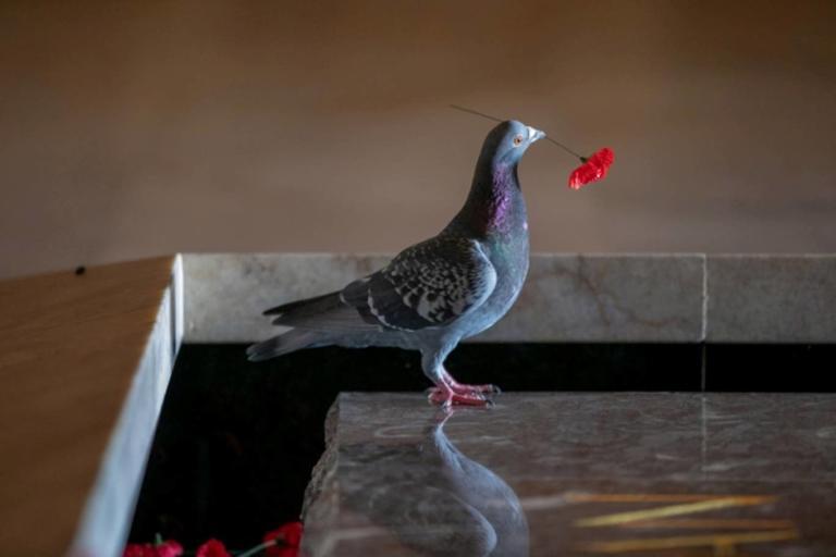 Χαρμόσυνα νέα για το περιστέρι «θανατοποινίτη» – Δεν θα εκτελεστεί