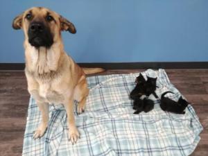 Αδέσποτη σκυλίτσα έσωσε από βέβαιο θάνατο 5 γατάκια! [pics]