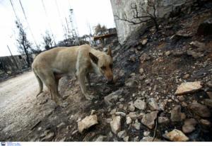 Φθιώτιδα: Κρέμασαν σκύλο σε κιόσκι της Στυλίδας – Το σοκ του αθλητή που πέρασε από το σημείο!