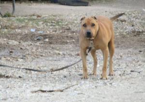 """Κομοτηνή: Μήνυση στο δημοτικό κυνοκομείο για κακοποίηση τυφλού σκύλου – """"Πώς να νιώθει άραγε"""";"""