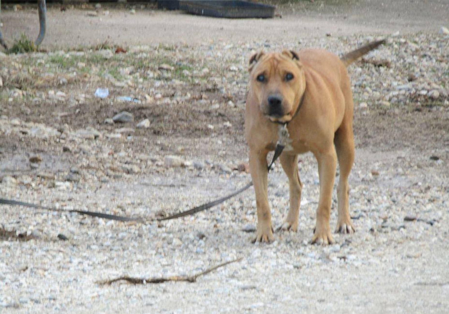 Κρήτη: Νέα κτηνωδία – Πυροβόλησαν σκύλο! Έχασε ήδη το ένα του πόδι