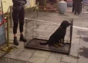 Σάλος στη Θεσσαλονίκη για ζωντανά σκυλιά που χρησιμοποιήθηκαν σαν… ντεκόρ!
