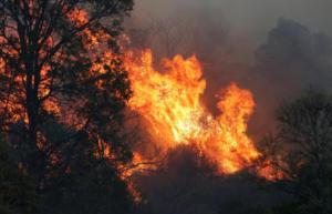"""Αυστραλία: """"Μαυρίζουν"""" την χώρα οι καταστροφικές πυρκαγιές"""