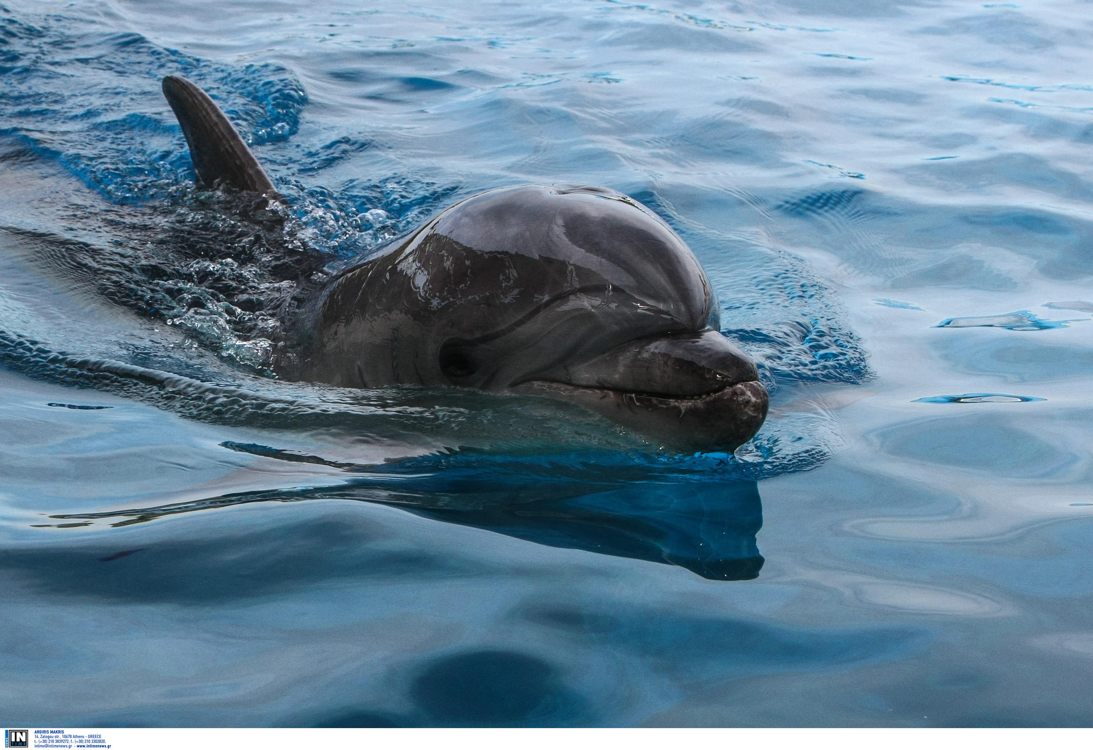 Ηλεία: Η θάλασσα ξέβρασε δύο φορές το ίδιο νεκρό δελφίνι! Η αδιαφορία που συνεχίζεται…
