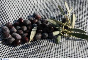 Σαρώνουν οι καλαματιανές ελιές
