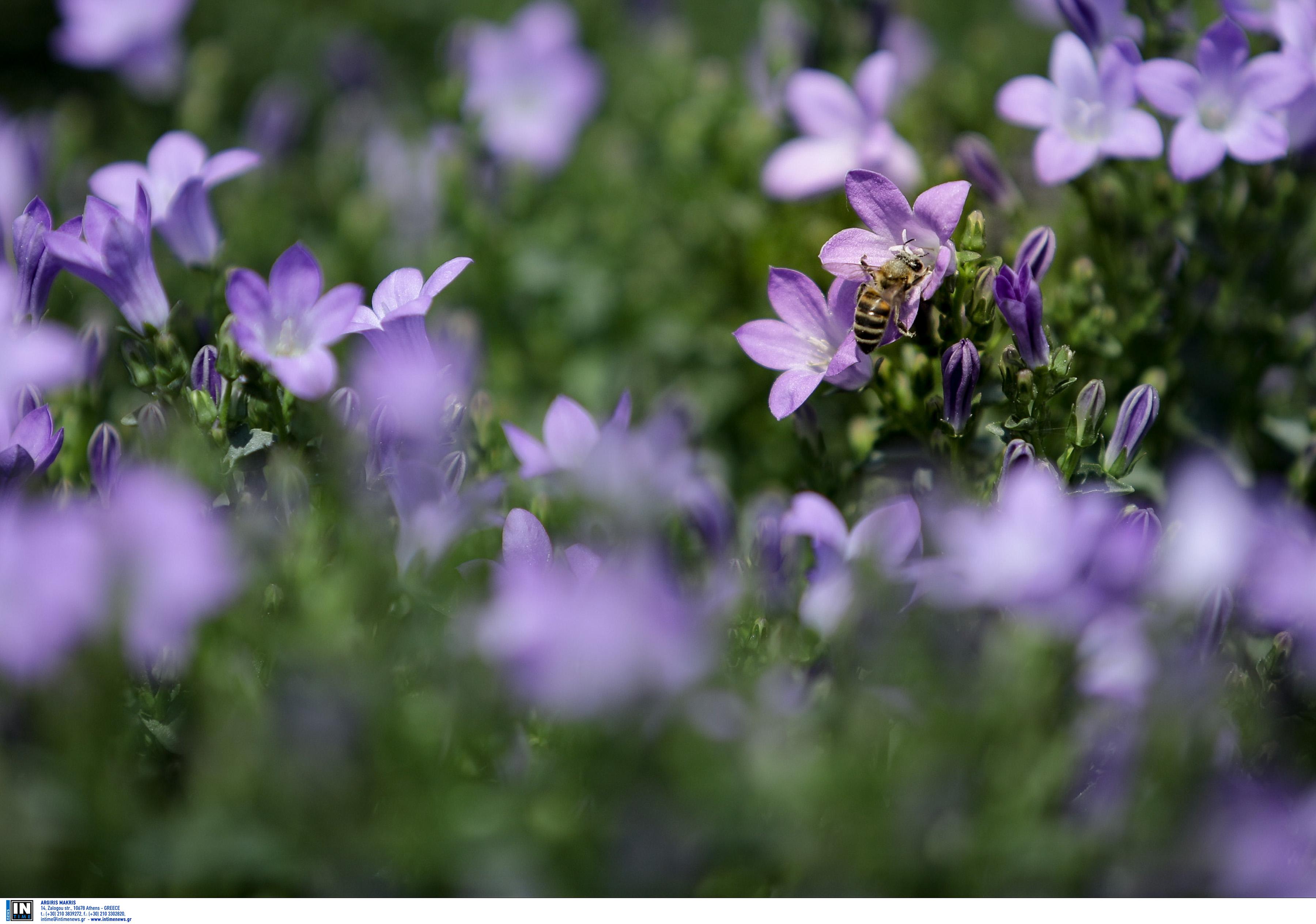 Τα φυτά στο σπίτι βελτιώνουν την ψυχική κατάσταση στη διάρκεια του lockdown