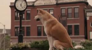 """Σκυλίτσα… """"Χάτσικο"""", περιμένει τον ιδιοκτήτη της που έχει πεθάνει εδώ και 5 χρόνια!"""