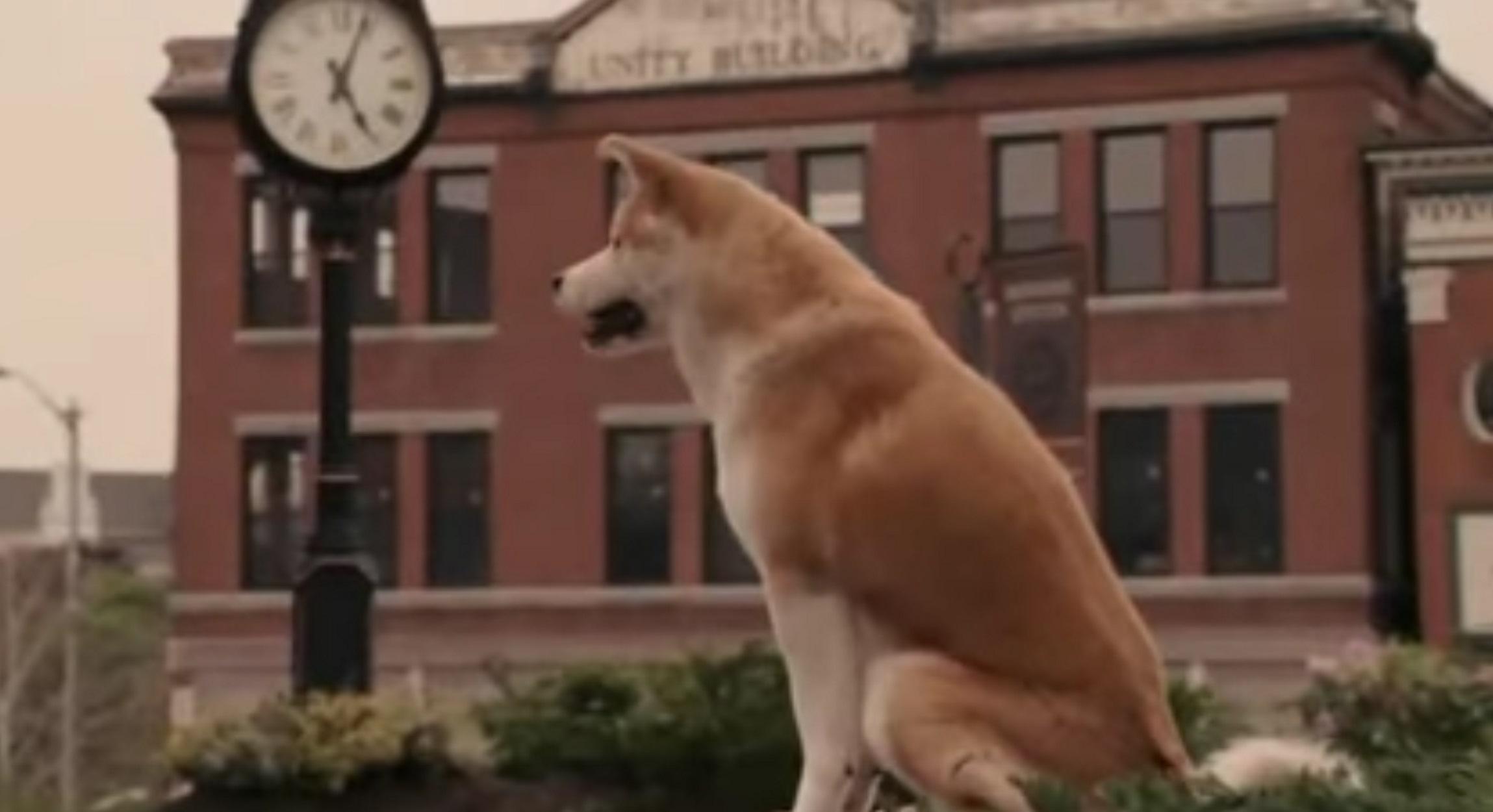 Χάτσικο: Η ιστορία του πιο πιστού σκύλου στον κόσμο