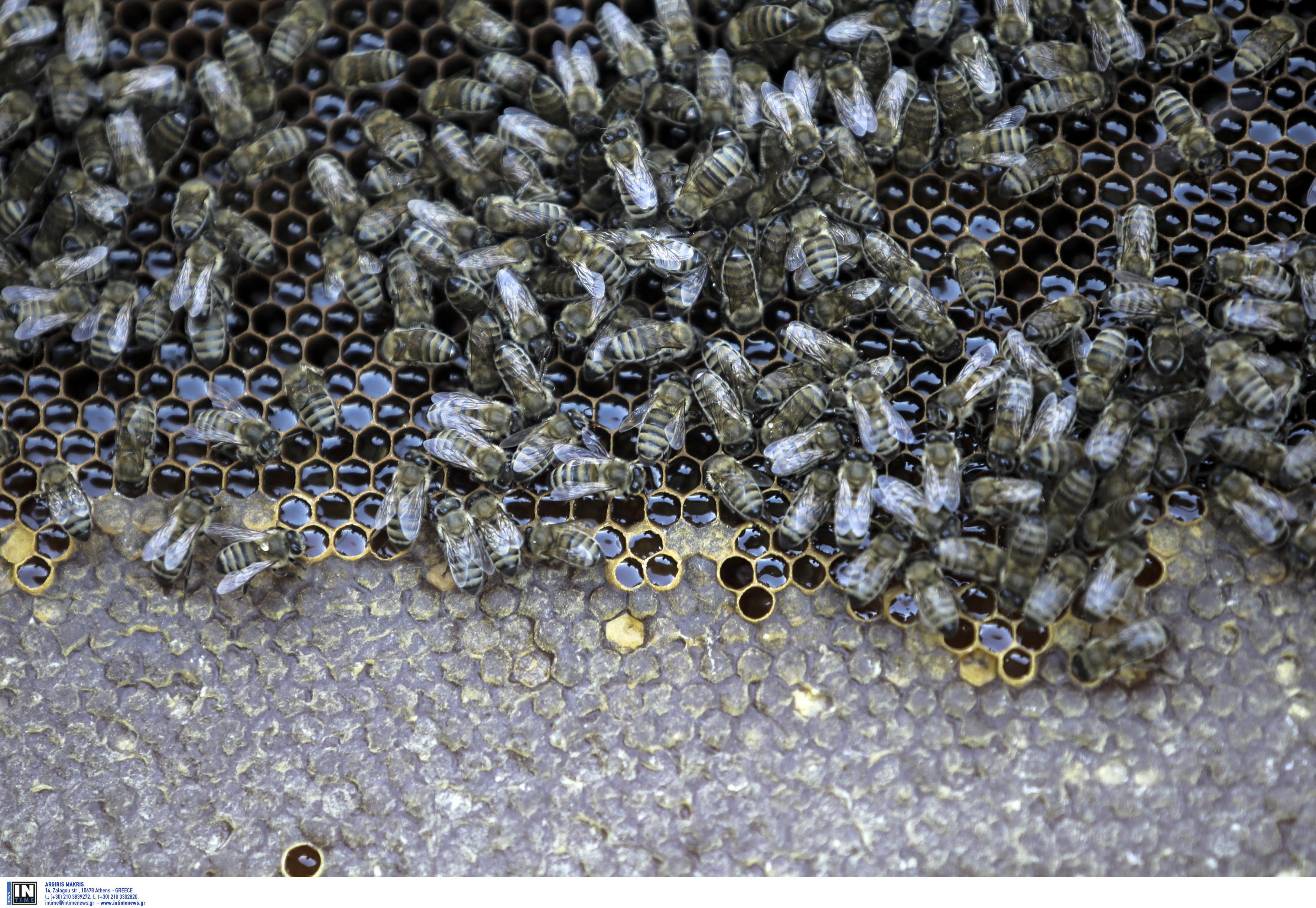 Χαλκιδική: Έκλεψαν κυψέλες μελισσών αξίας άνω των 1.000 ευρώ! Χειροπέδες στους δράστες