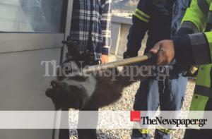 Βόλος: Το κουνάβι που αναστάτωσε το νοσοκομείο! Τα έχασαν γιατροί, νοσηλευτές και ασθενείς [pics]