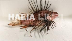Ηλεία: Το τελευταίο ψάρεμα του 2019 έκρυβε δυσάρεστες εκπλήξεις! Μέσα στα δίχτυα αυτό το ψάρι