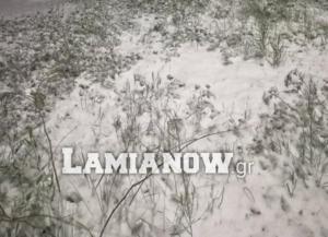 Καιρός – Ζηνοβία: Έφτασαν τα πρώτα χιόνια σε Λοκρίδα, Βόρεια και Δυτική Φθιώτιδα [video]