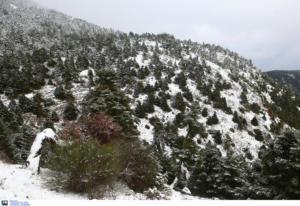 Δερβενοχώρια: Βρέθηκε ζωντανός ο 27χρονος αγνοούμενος! Αίσιο τέλος στο θρίλερ μέσα στα χιόνια