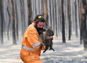 Αυστραλία: Πάνω από 1 δισ. ζώα έχουν καεί! Ξεκληρίζονται πληθυσμοί κοάλα
