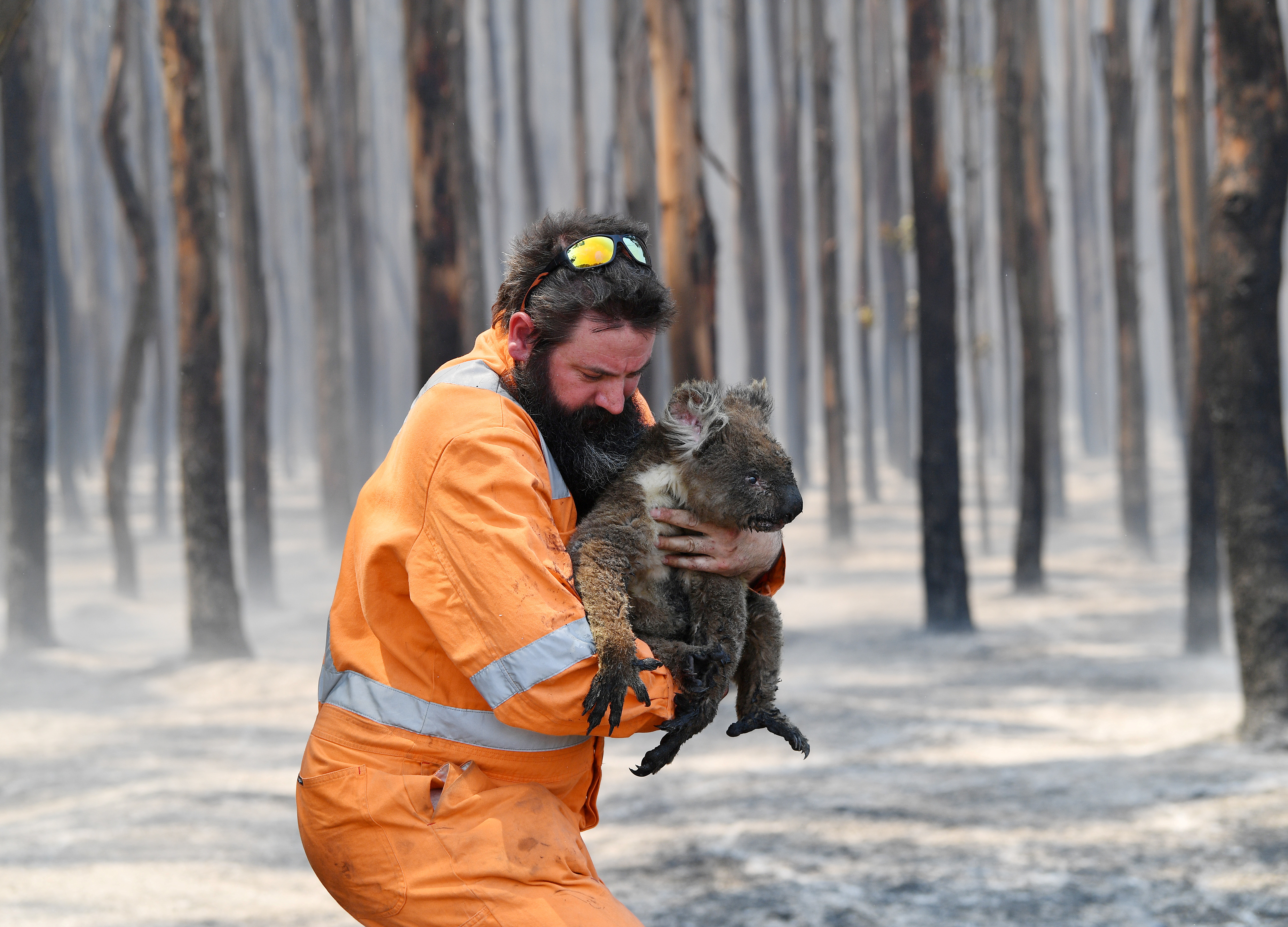 """""""Κραυγή"""" από τα ζώα στην Αυστραλία! Πάνω από 1 δισ. έχουν καεί - Ξεκληρίζονται πληθυσμοί κοάλα"""
