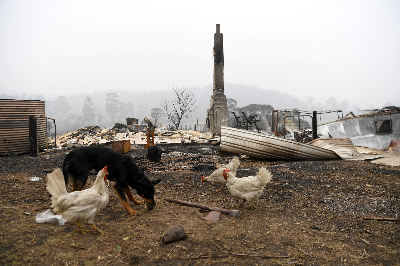 Αδιανόητη οικολογική καταστροφή στην Αυστραλία!