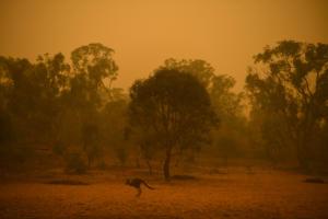 Αυστραλία: Οι καπνοί από τις κολοσσιαίες φωτιές έφτασαν στην Χιλή και την Αργεντινή! [pic]