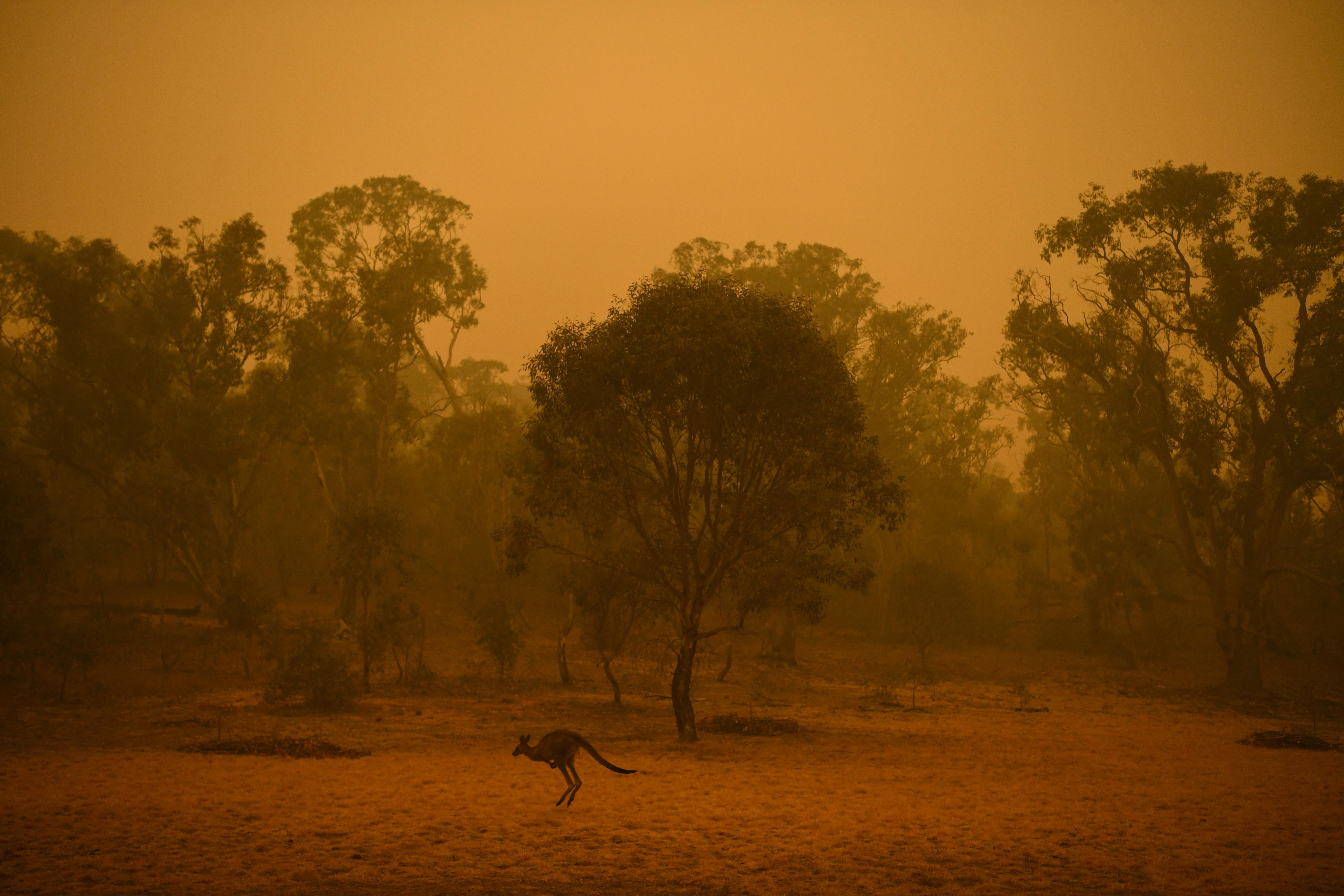 Φωτιές Αυστραλία