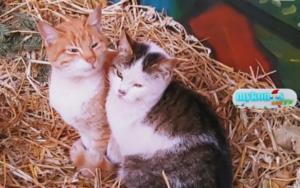 Πιερία: Τα αδέσποτα ζώα βρήκαν τη ζεστασιά που έψαχναν! Οι πιο γλυκές εικόνες της ημέρας [video]