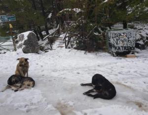 Καιρός Πρωτοχρονιά: Με χιόνια, καταιγίδες και κρύο το… ποδαρικό του 2020