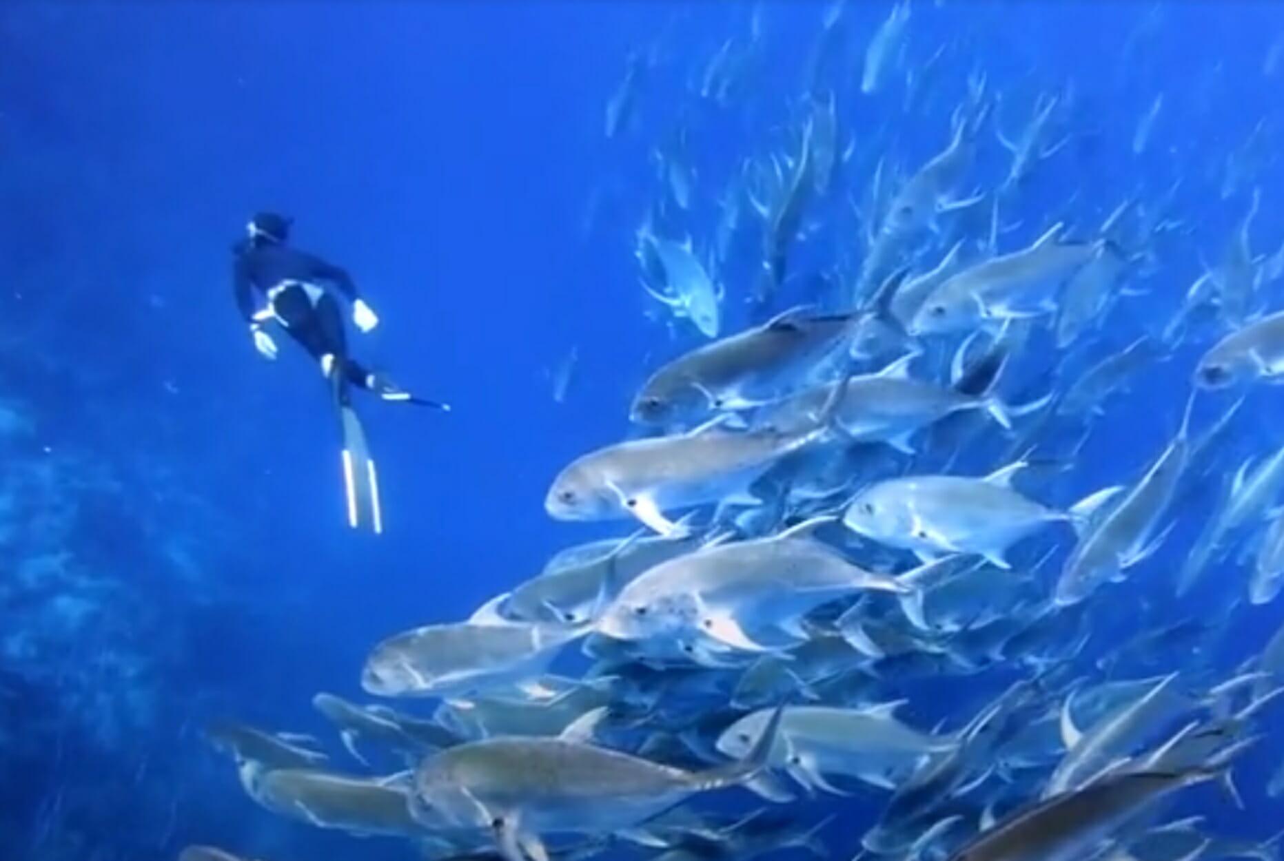 Δύτης περικυκλώνεται από κοπάδι ψαριών και το θέαμα είναι φανταστικό!