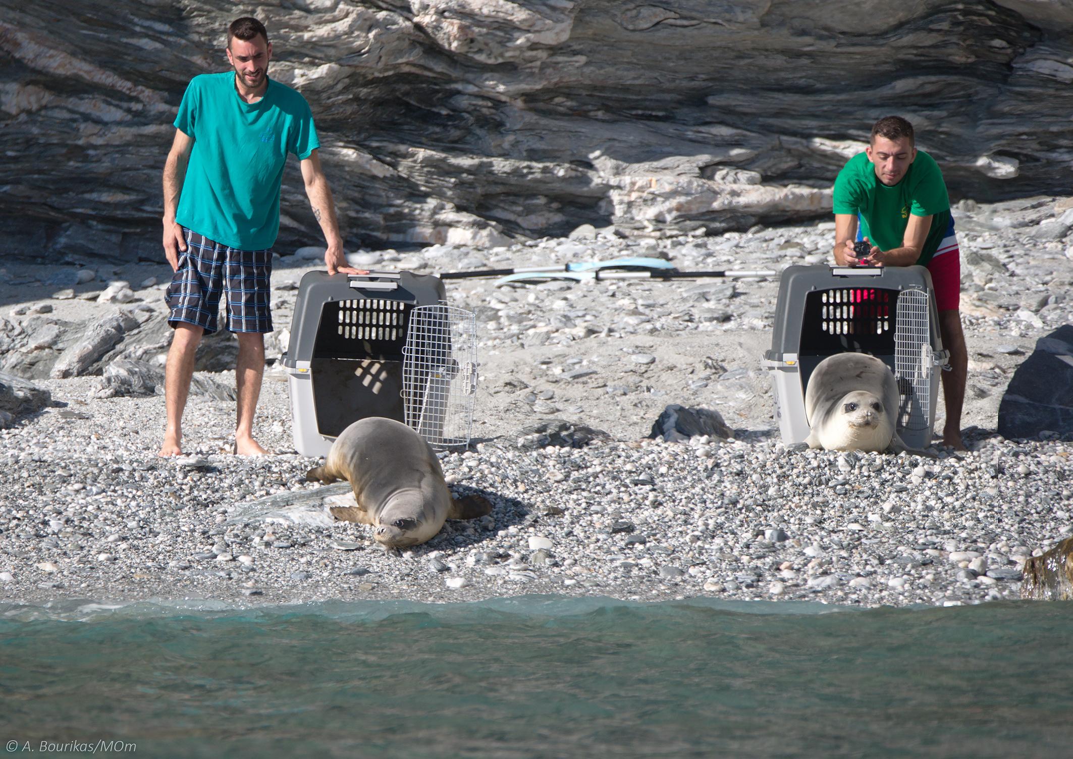 Κυκλάδες: Η Λένα και η Νικόλ ξανά στο φυσικό τους περιβάλλον! Έτσι επέστρεψαν στη θάλασσα (Φωτό)