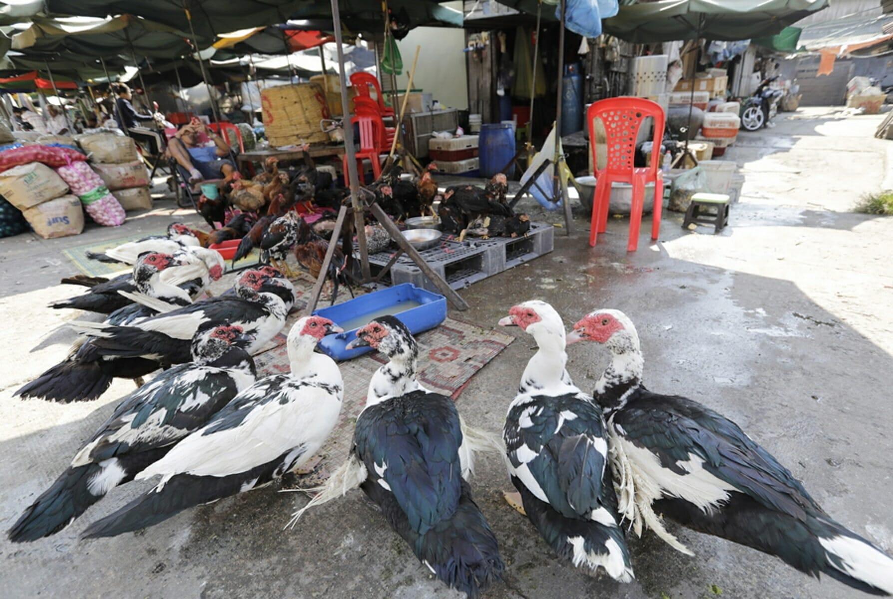 Νέα κρούσματα γρίπης των πτηνών στη Βουλγαρία