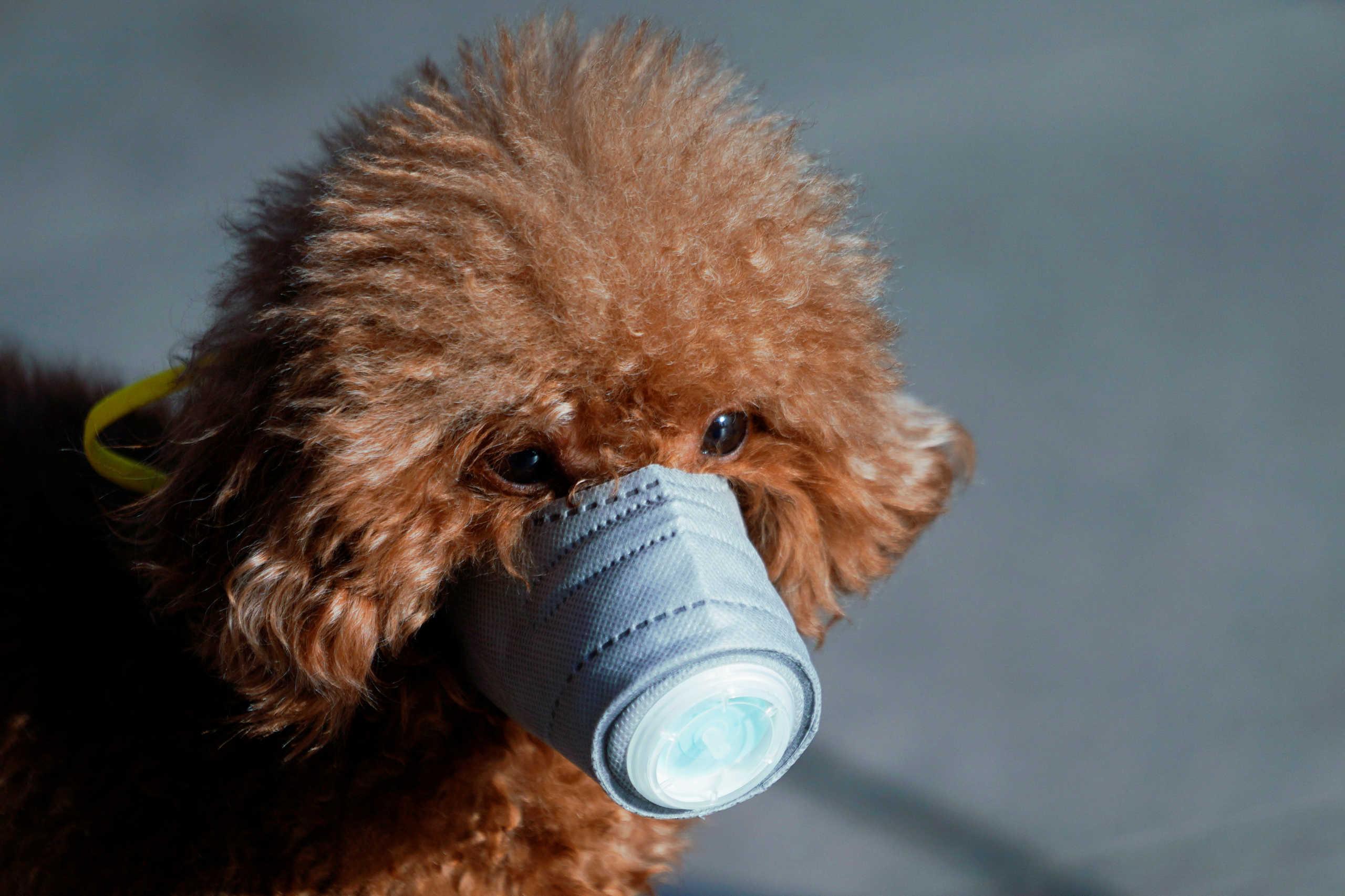 Σκύλος μπήκε σε καραντίνα γιατί βρέθηκε θετικός στον κορονοϊό