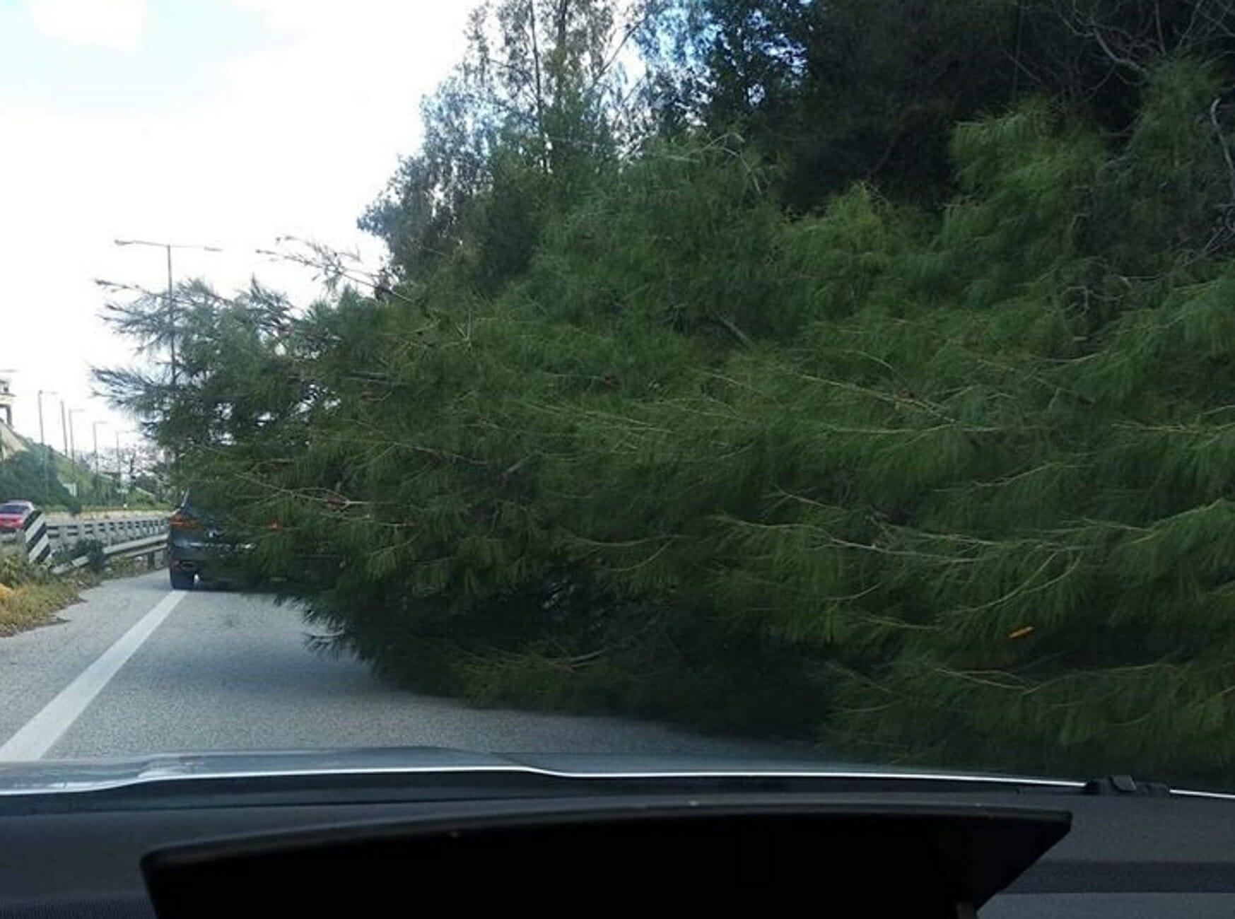 Κρήτη: Η πτώση του δέντρου έκλεισε το ένα ρεύμα της εθνικής οδού! Τα έχασαν οι οδηγοί (Φωτό)
